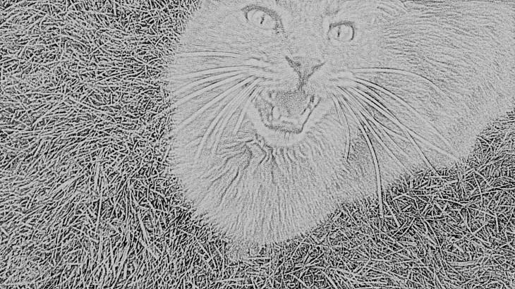 Austin Cat II.png
