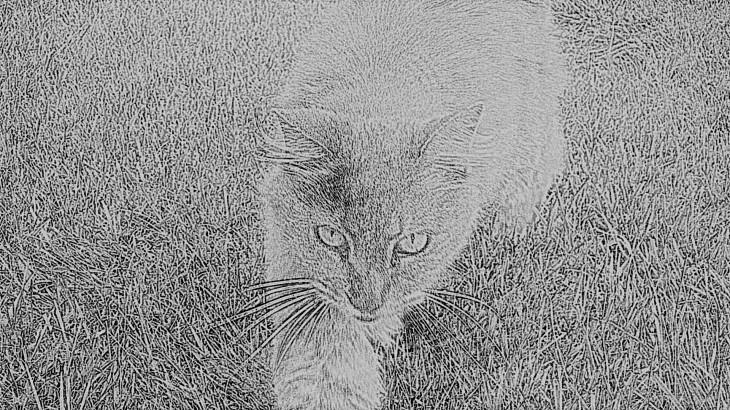 Austin Cat III