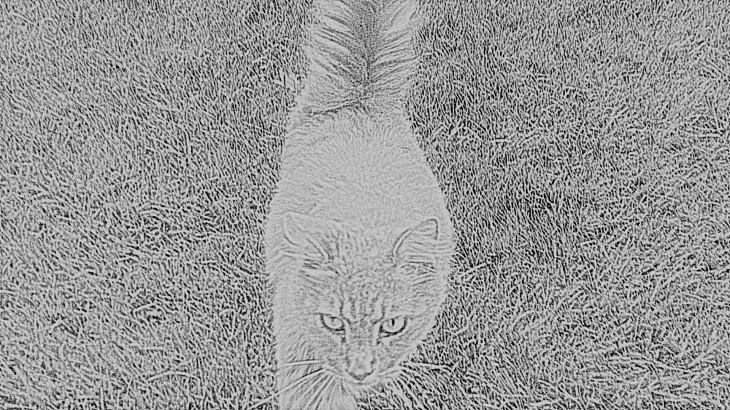 Austin Cat.png
