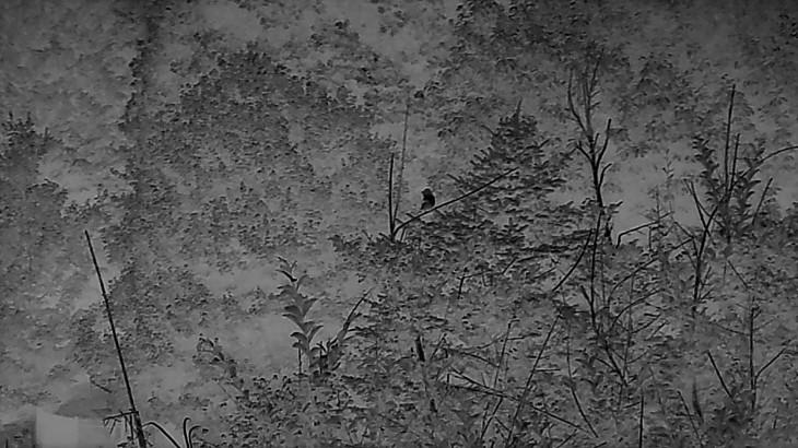 Grey bird.png