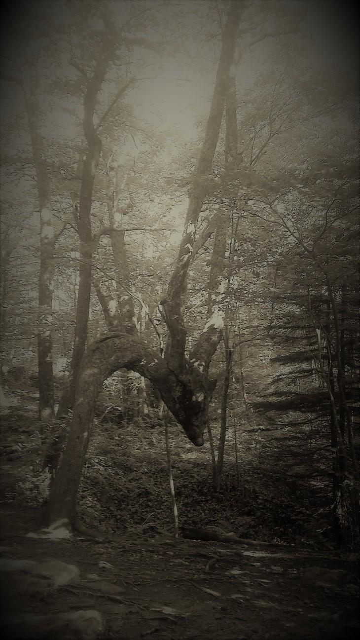 Hanging Tree.jpg
