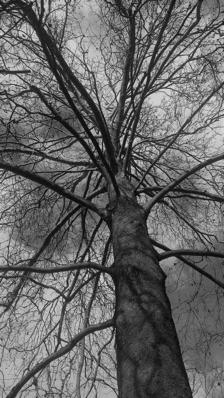 little seed big tree.jpg