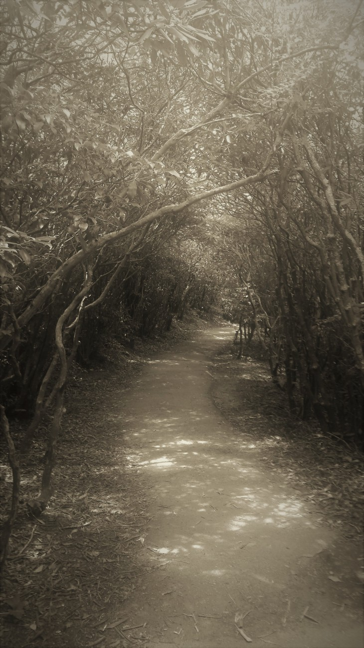 nature tunnel II.jpg