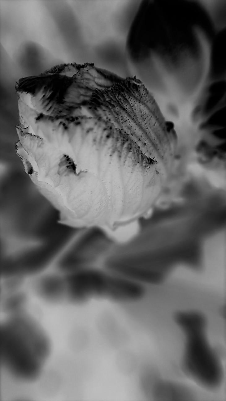 Negative Before-bloom
