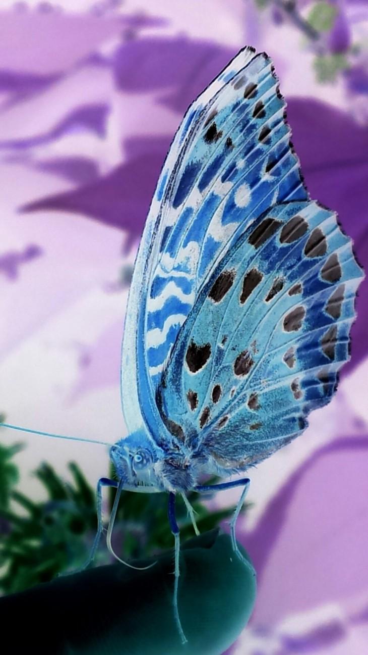 negative butterfly I