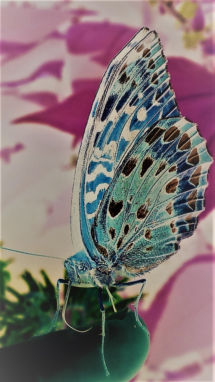 negative butterfly II