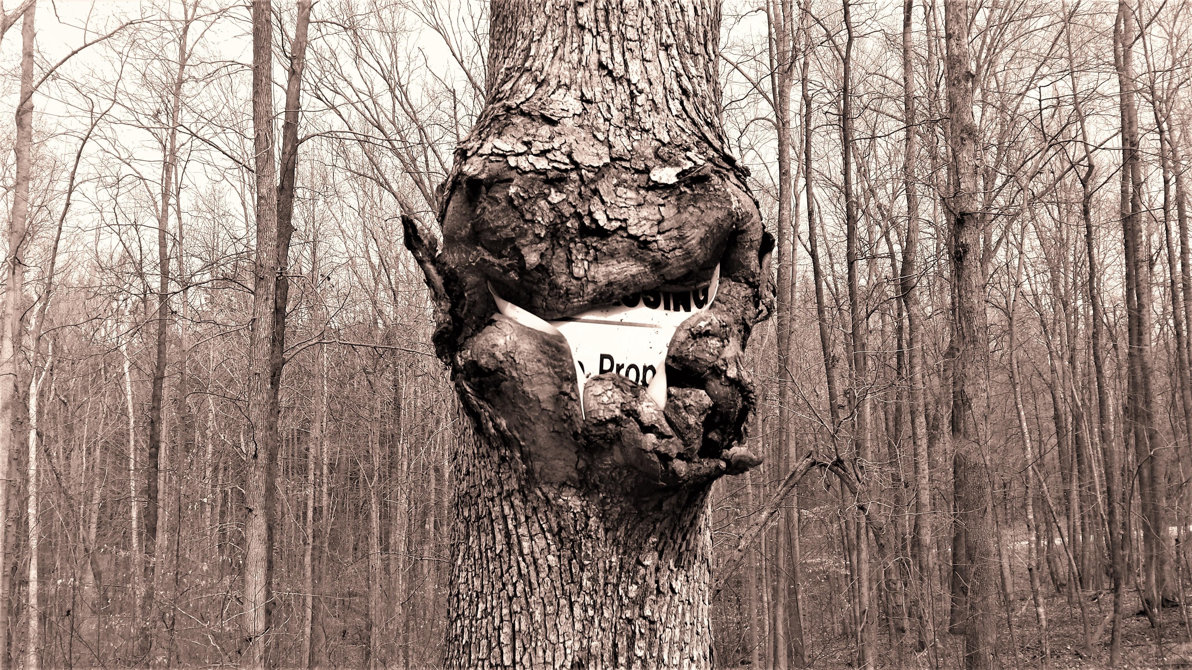 revenge of the trees.jpg
