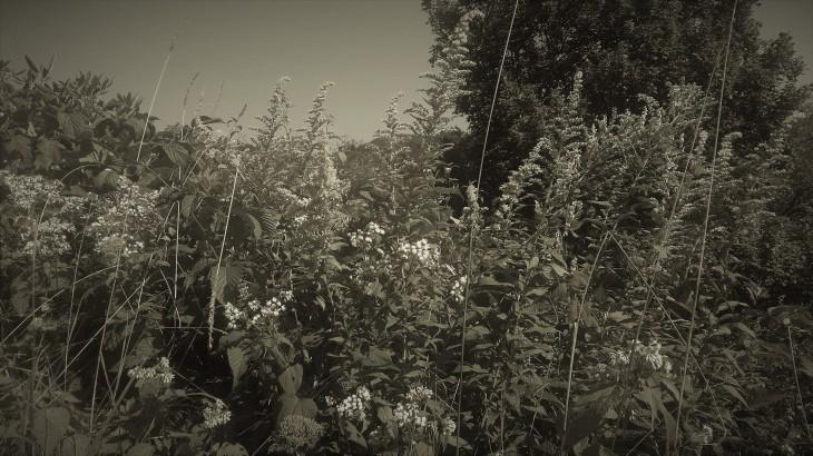 Wild flowers II.jpg