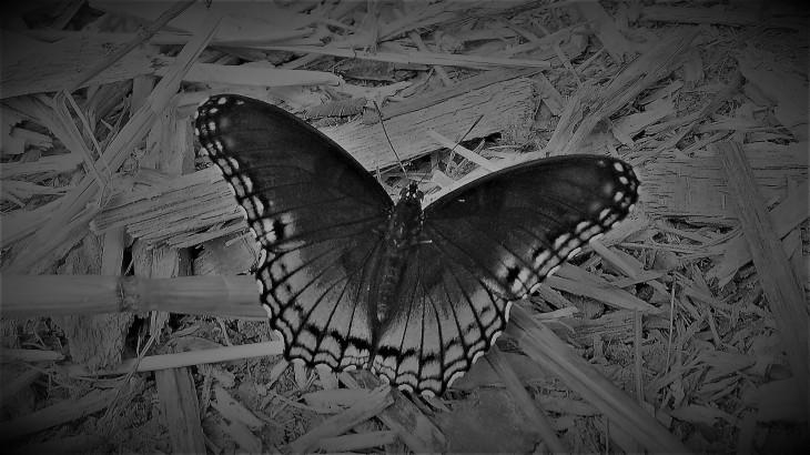 blue butterfly III.jpg