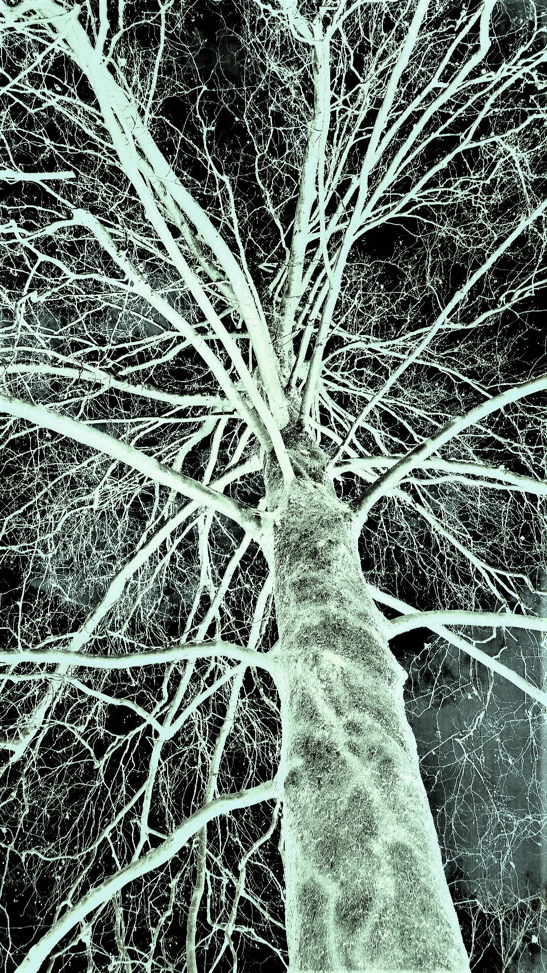Dendrite Tree III.png