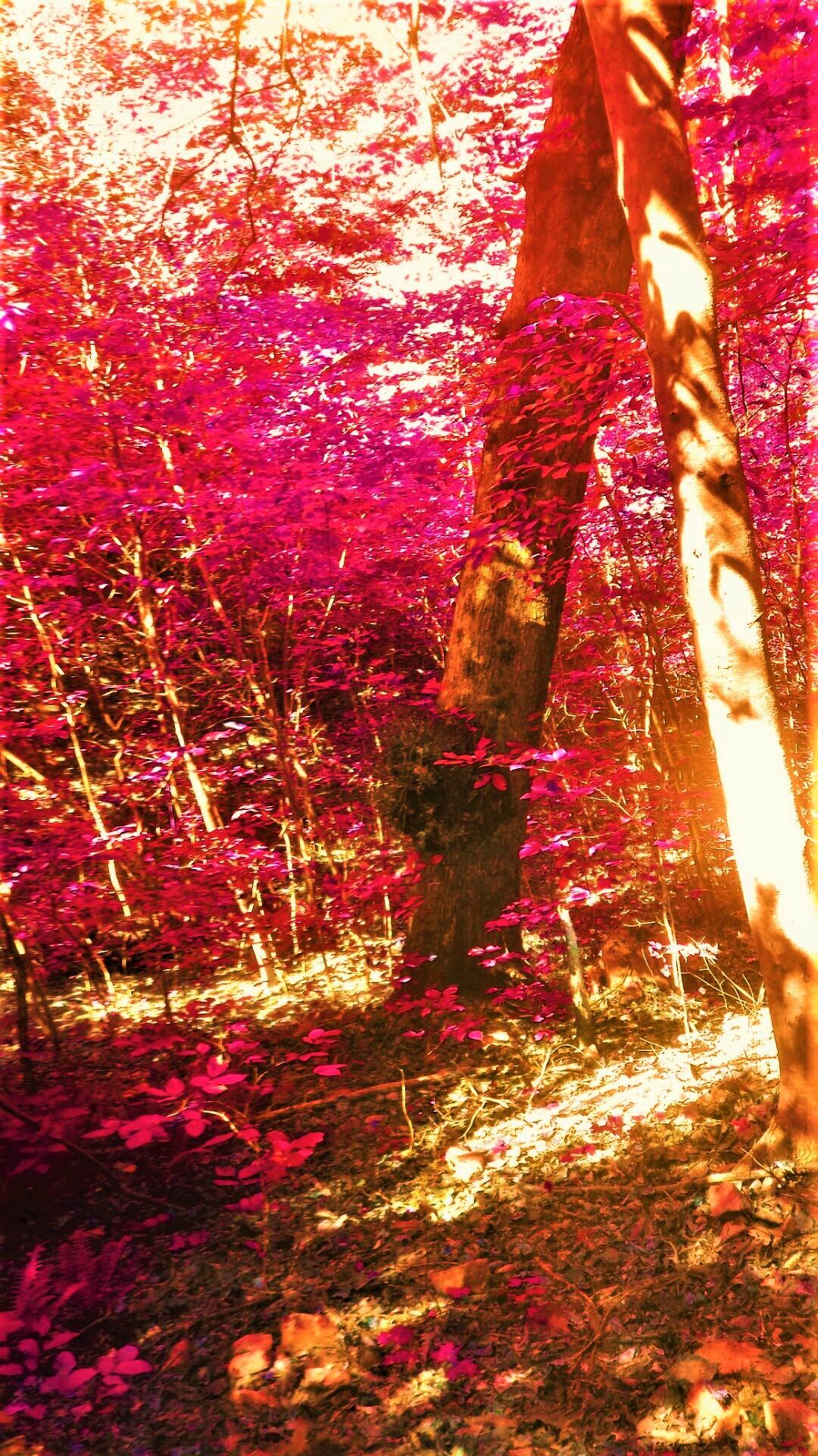 Fairy Woods II.png