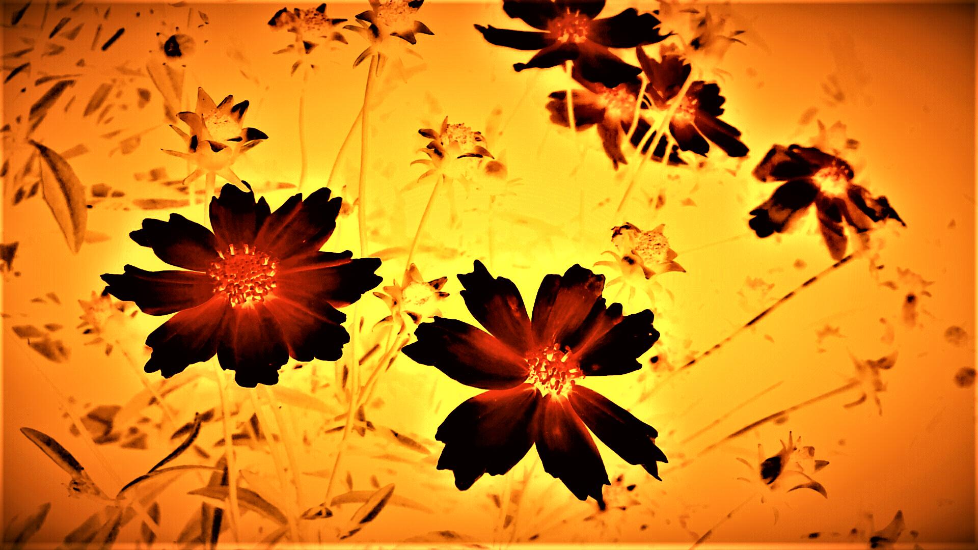 Garden Flowers II.png