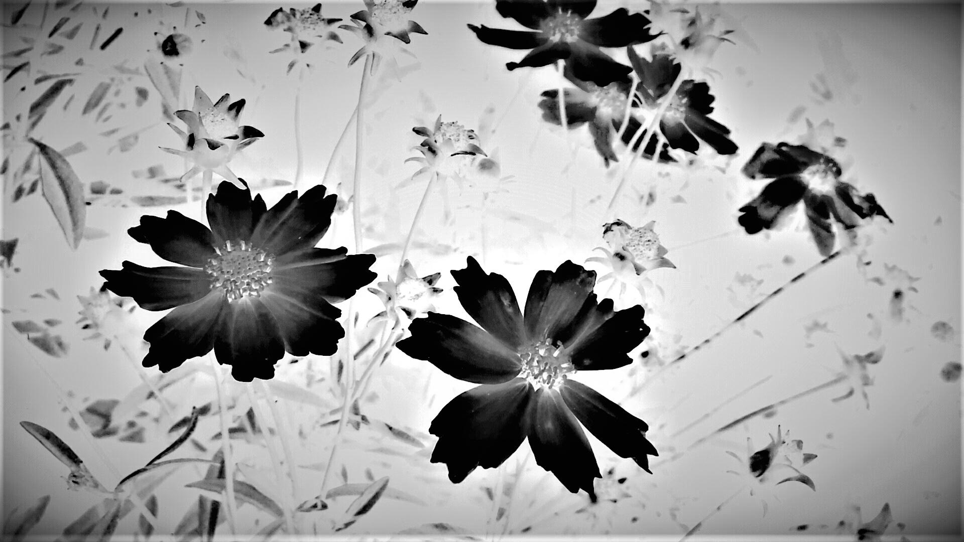 Garden Flowers .png