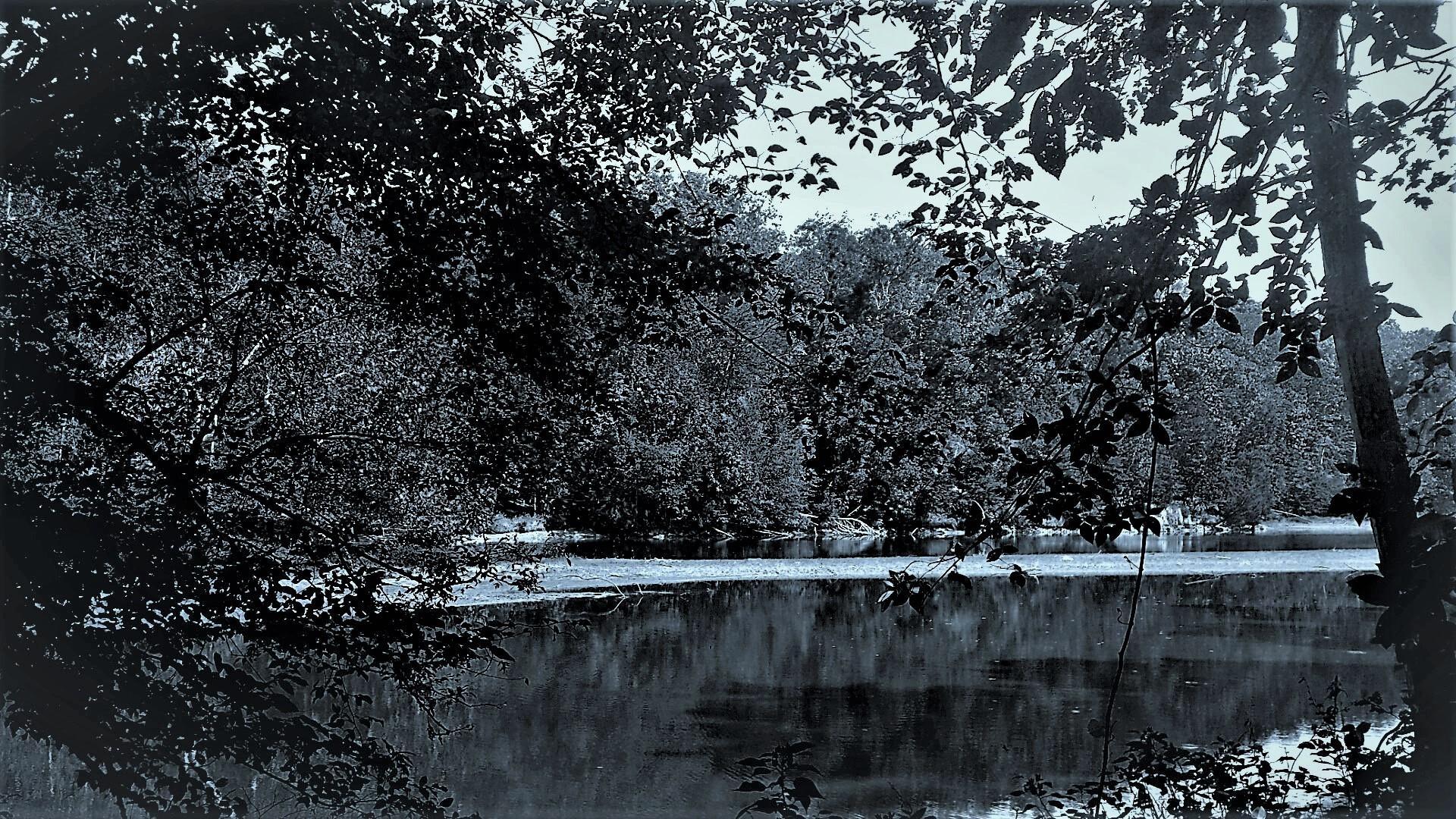 Grey Marsh.png