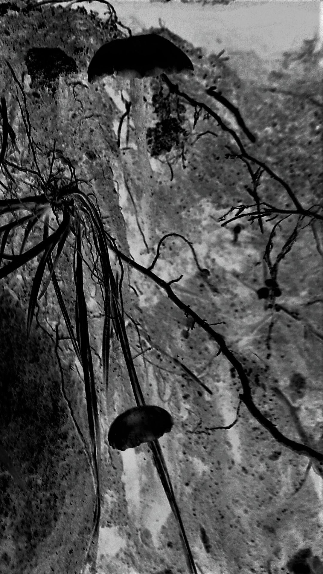 grey negative mushroomland II.png